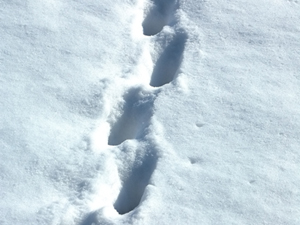 1149116_53175467_Snow_Footprints_royalty_fee_stock_xchng_300