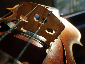 918308_53296922_violin_royalty_free_stock_xchng_300