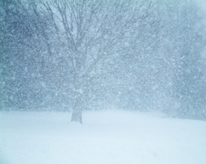 96692_7551_blizzard_stock_xchng_royalty_free_300_240