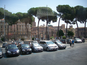 Rome_Umbrella_Pines_300