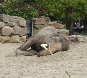 resting-elephant-1-1340299-1280x1156
