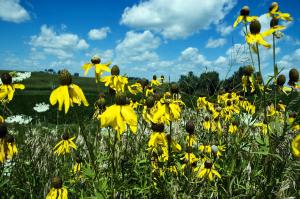 wildflowers-1353003-1919x1278